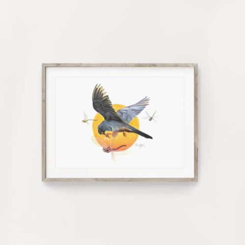 Red footed falcon bird art print
