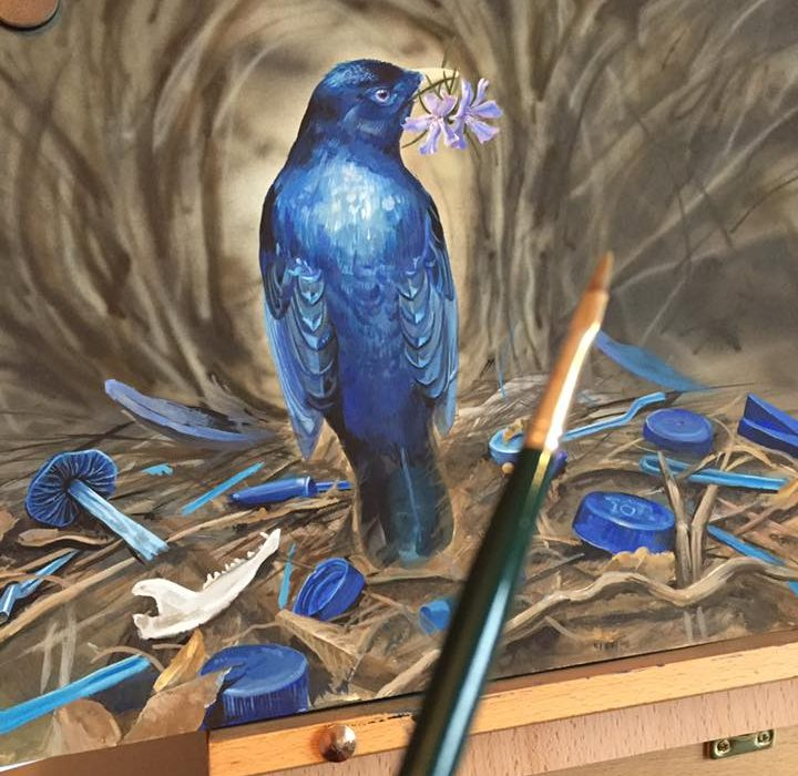 Satin Bower Bird Painting