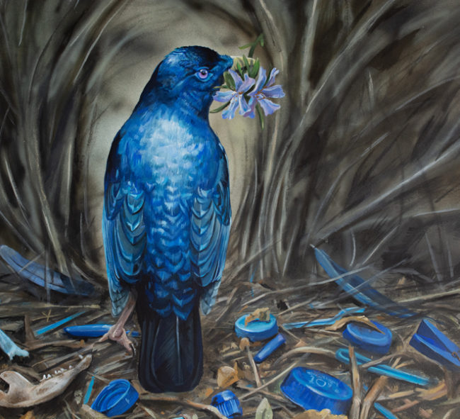 Original Wildlife Art Satin Bowerbird