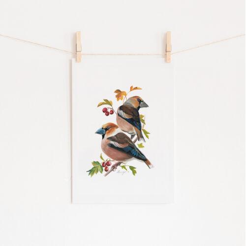 Hawfinch Painting Wildlife Art Print