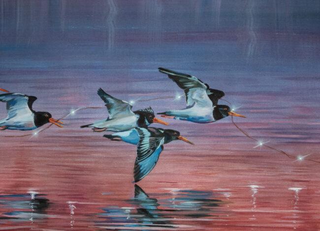 Oyster Catcher Bird Painting