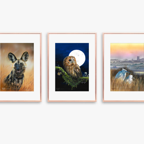 Free WIldlife Art Prints