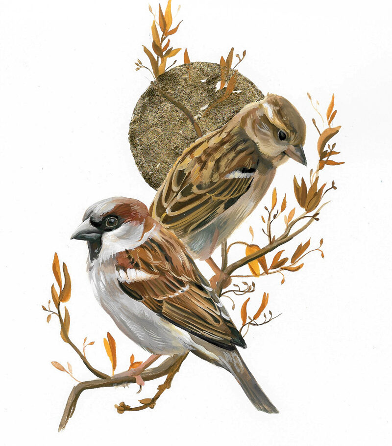 House Sparrow Painting Wildlife