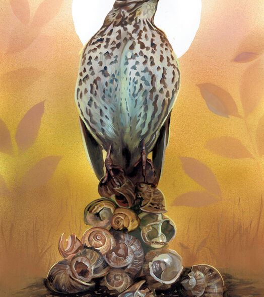 Gouache Painting of a Song Thrush perched on snail shells, titled 'The Great Escape' Wildlife art by krysten newby