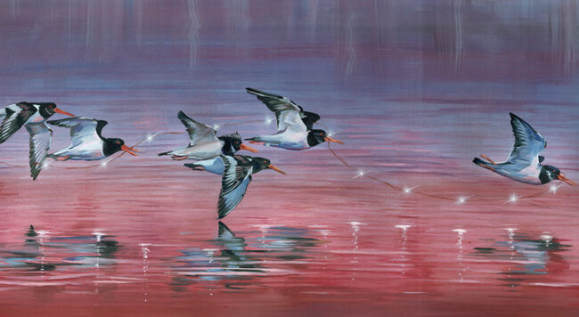 All Together Now Oyster Catchers Wildlife Art