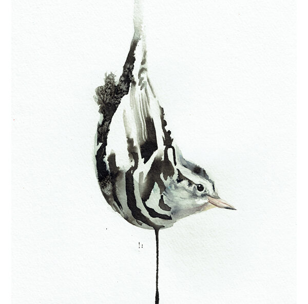 black and white warbler painting wildlife art