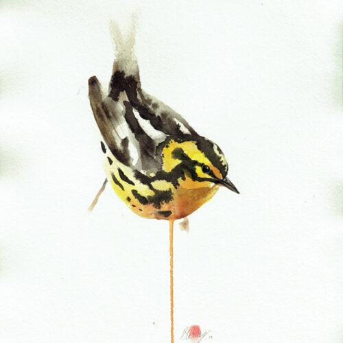 Blackburnian warbler American Wildlife art