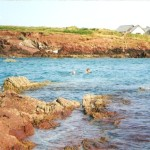 High tide swim at St. Brides Bay