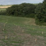 Lines of stakes