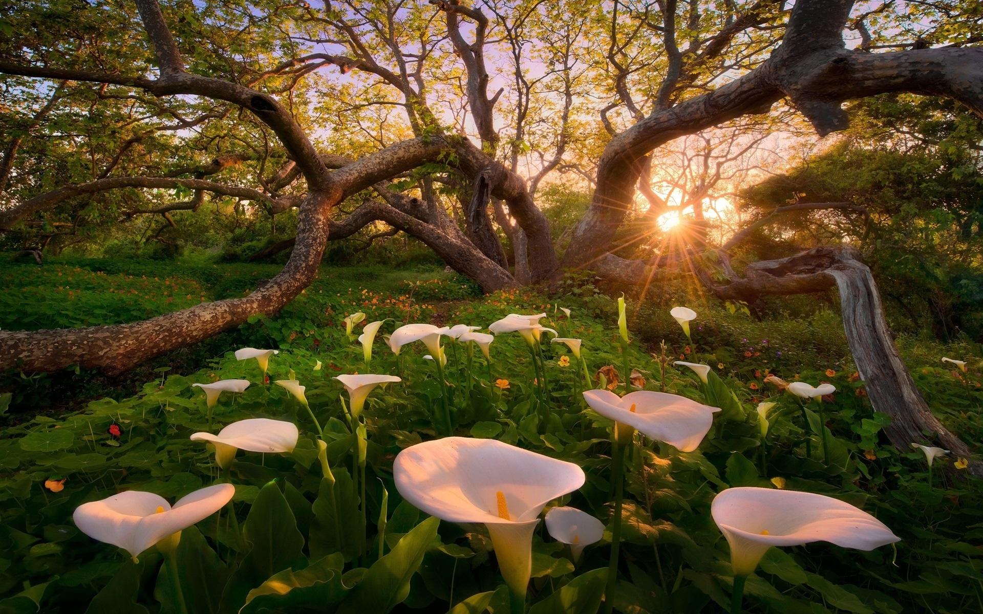 Doğa ve Çemberlerin Gücü