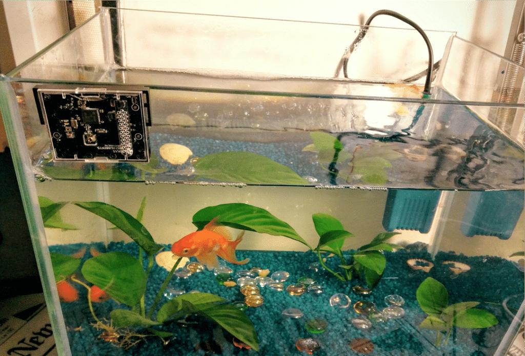 Fish and Chip IBM Watson IoT