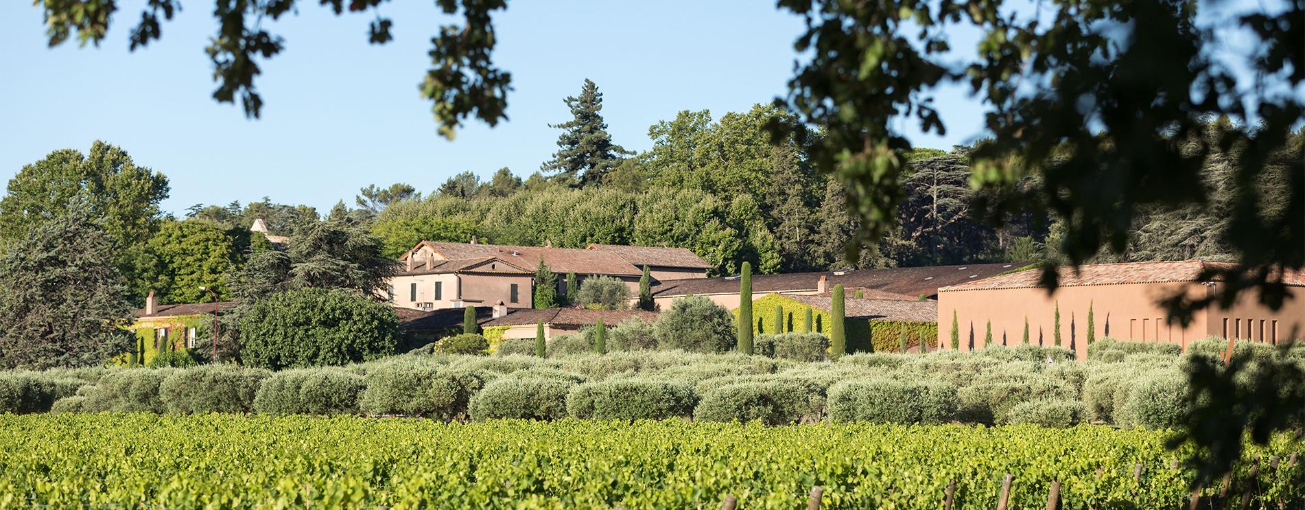 Roseline vineyard photo