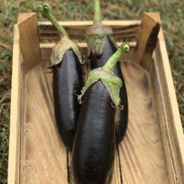 Patlıcan