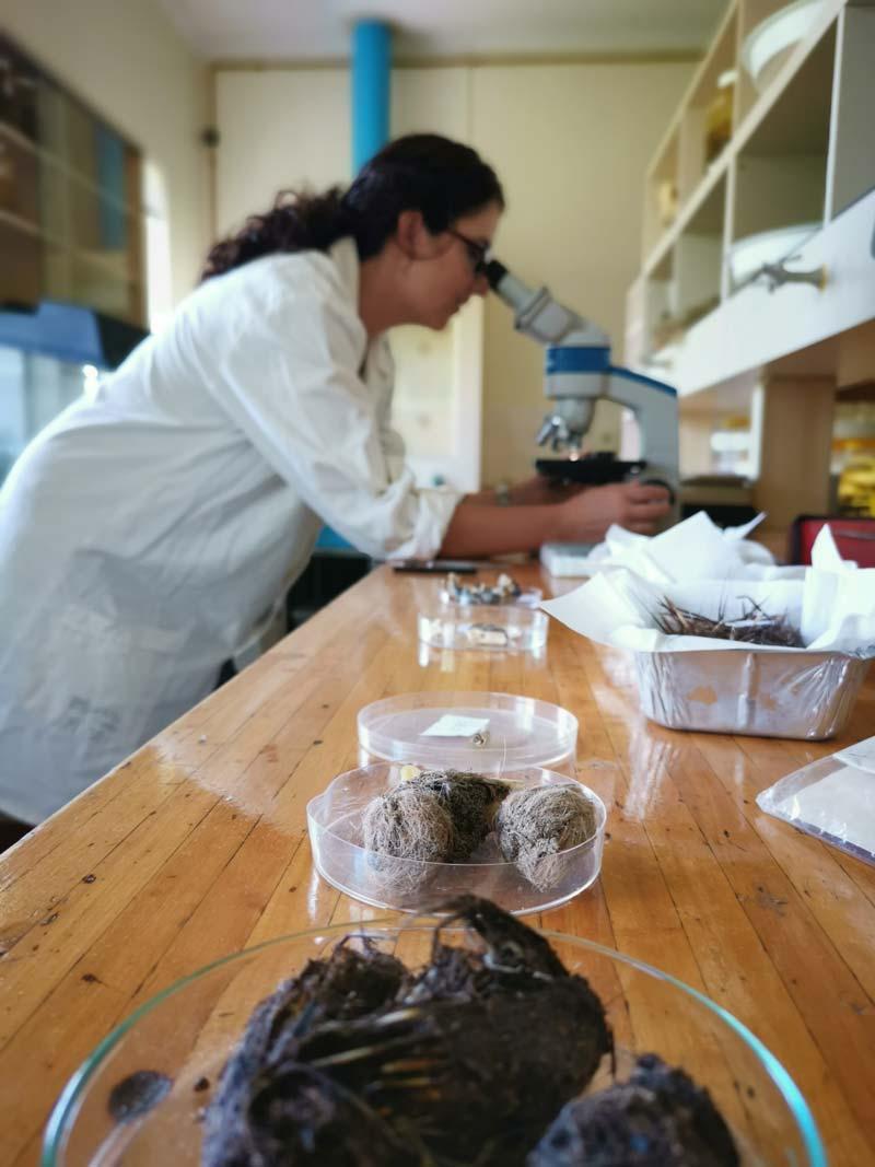 Anita Wilkinson Cape Leopard Trust Research