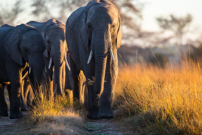 Game Rangers International World Elephant Day