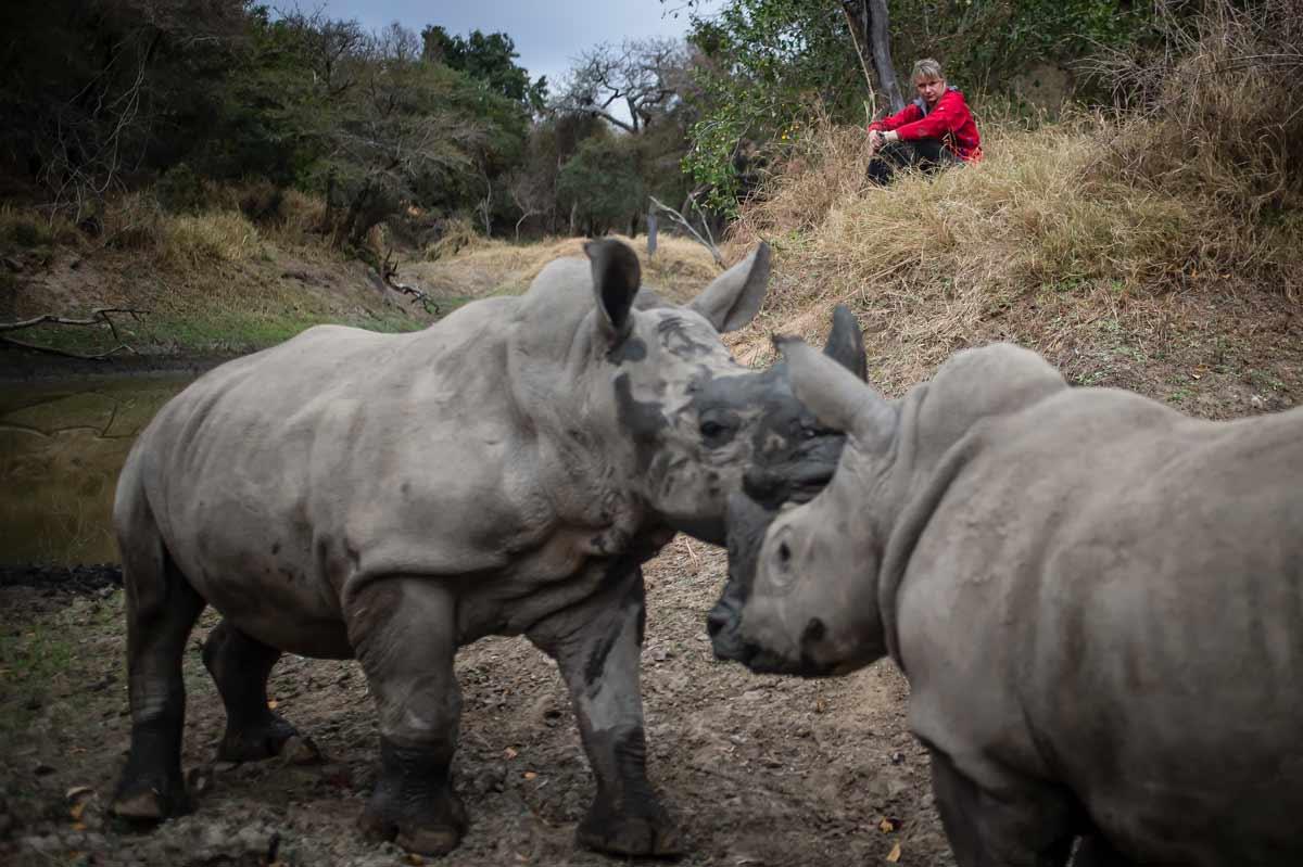 Adine Roode | World Rhino Day | HESC