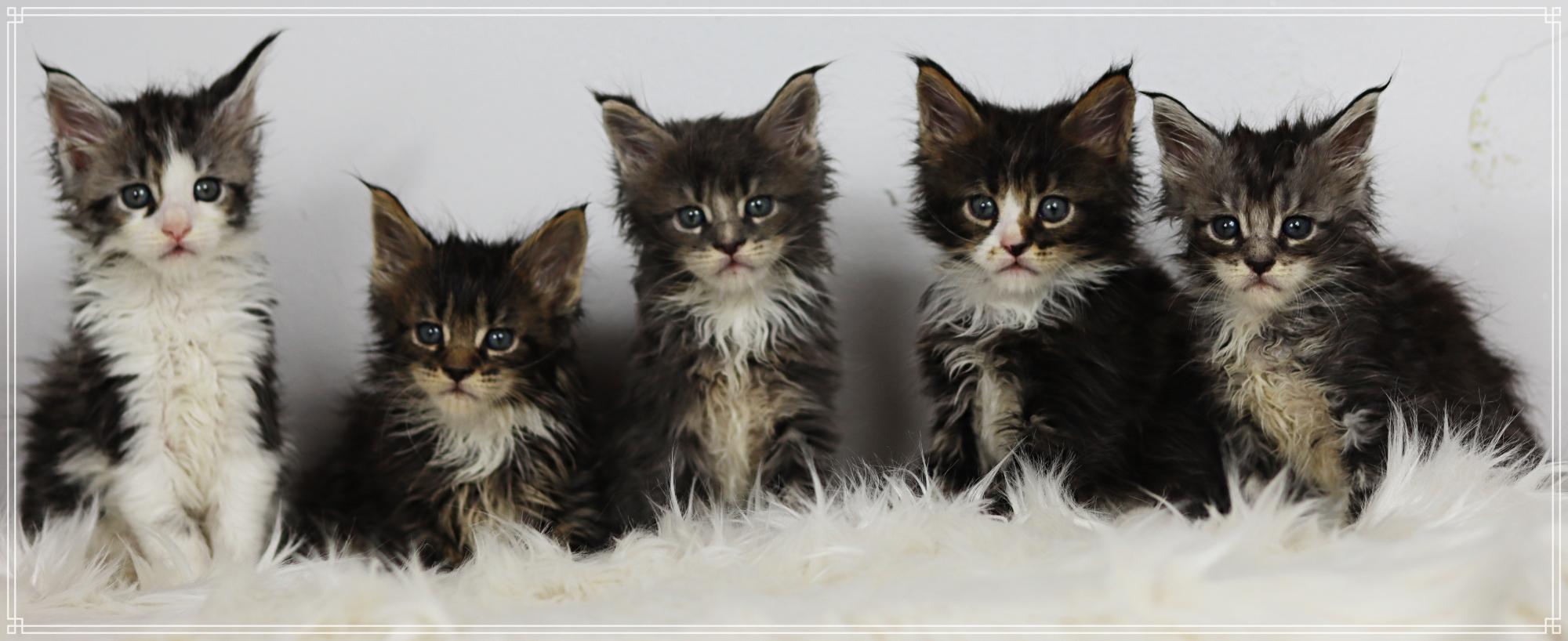 Gruppenbild der Kätzchen