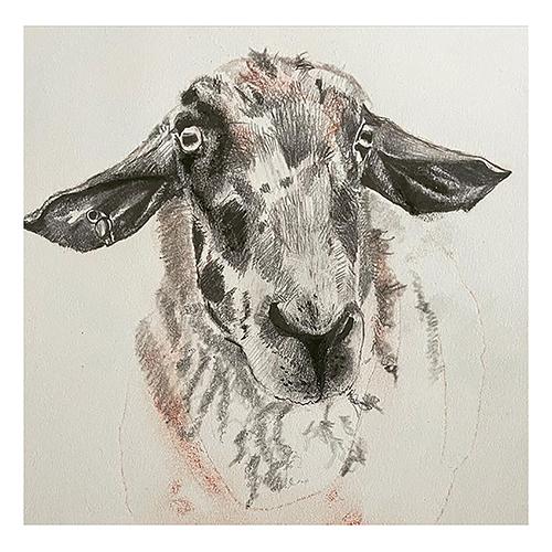 sheep_pencil_drawing