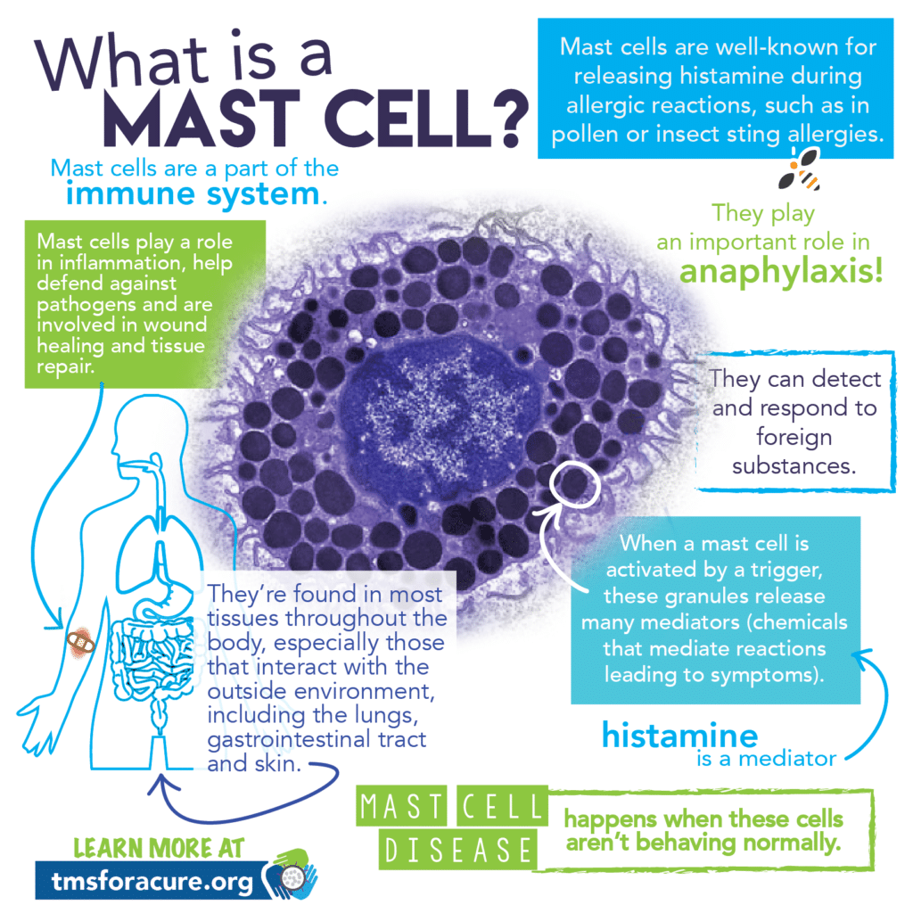 What are mast cells infographic