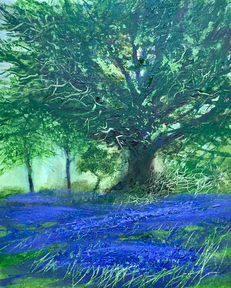Bluebells at Ballyseedy Wood