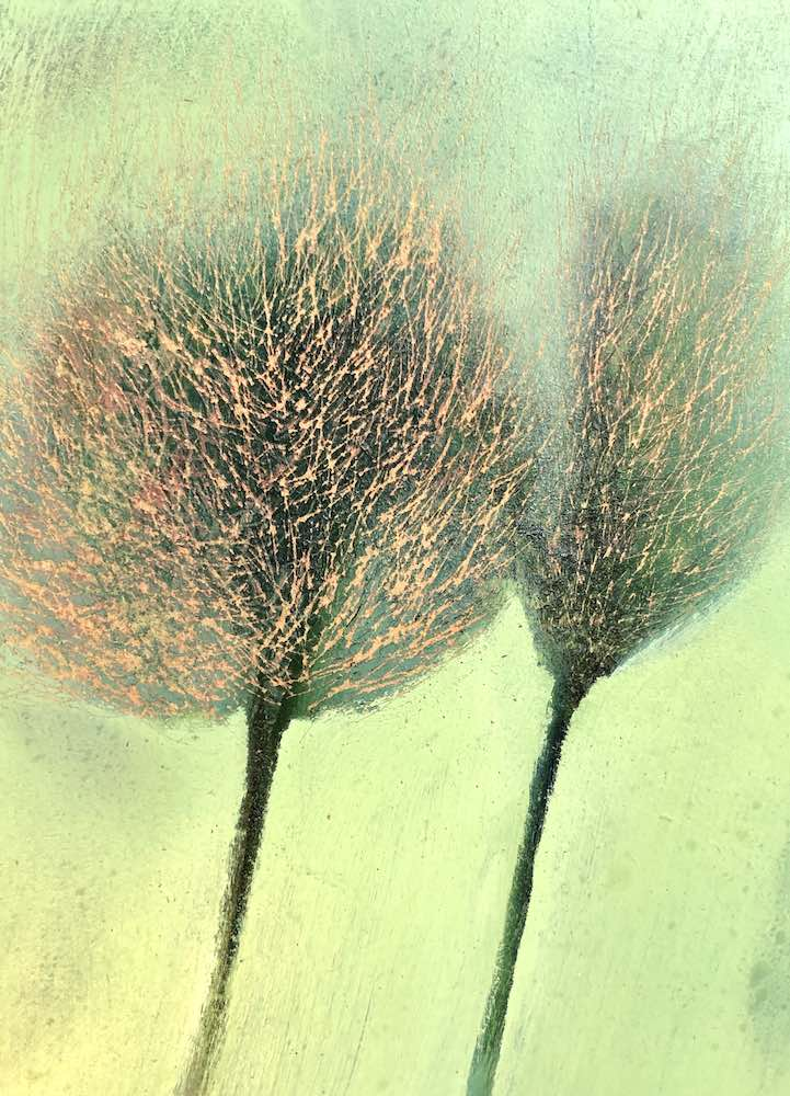 SOLD | Two Hawthorns | 12 x 9 ins | 30 x 23 cms | €650