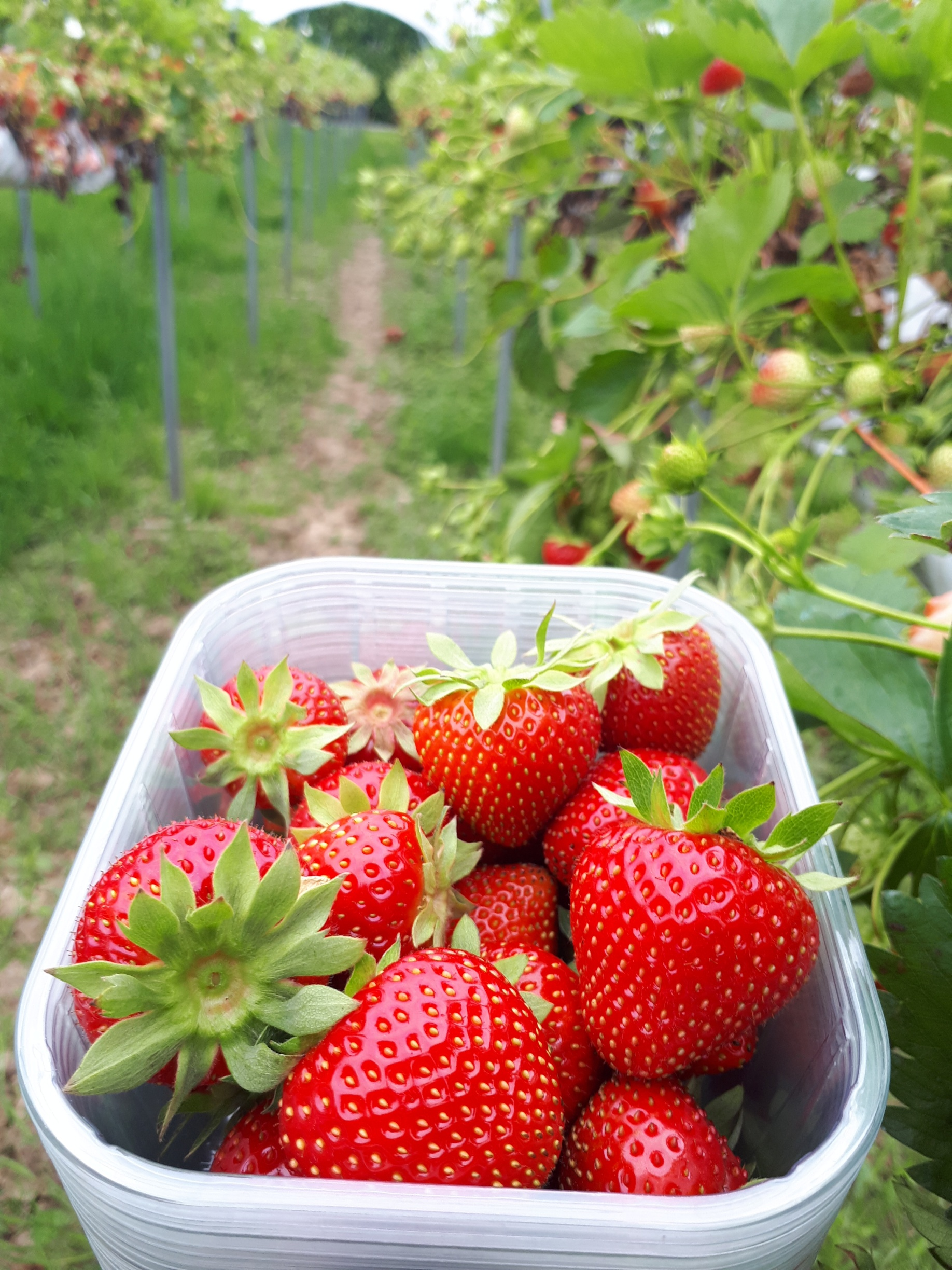 Strawberries on Sale!