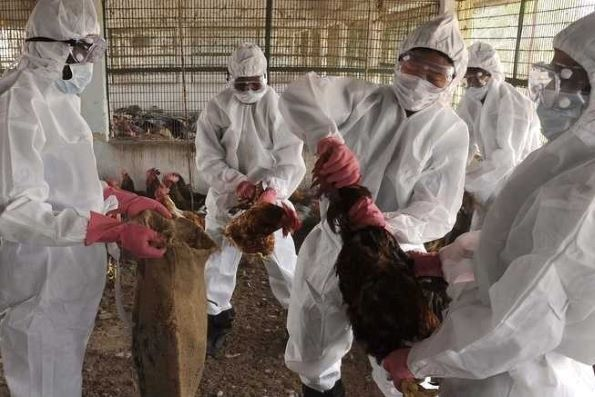 False: Coronavirus has not been found in broiler chicken