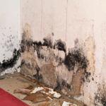 Mold Remediation Water Damage