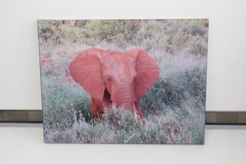 """Elephant 16"""" x 12"""""""