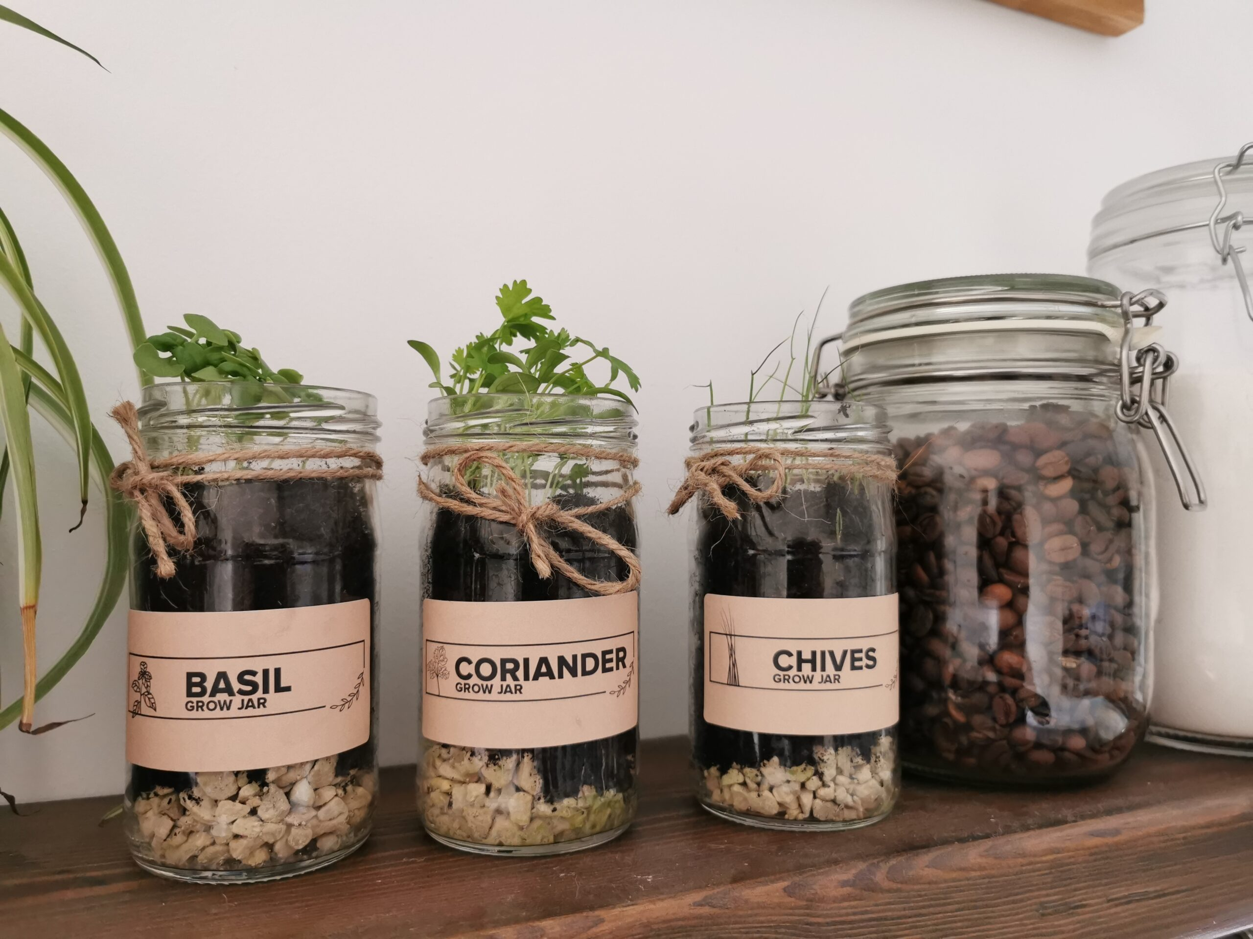 eco friendly gift - herb garden