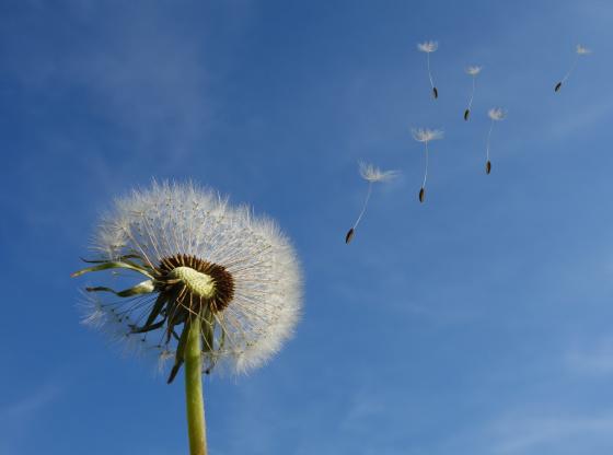 Seedballs and Vetiver Plantation