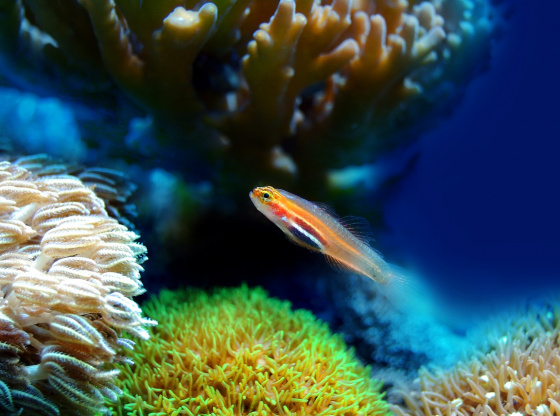 The changes that our Aquatic ecosystem has suffered