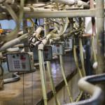 Shaw Renewables Biomass Biogas renewable energy milking parlour