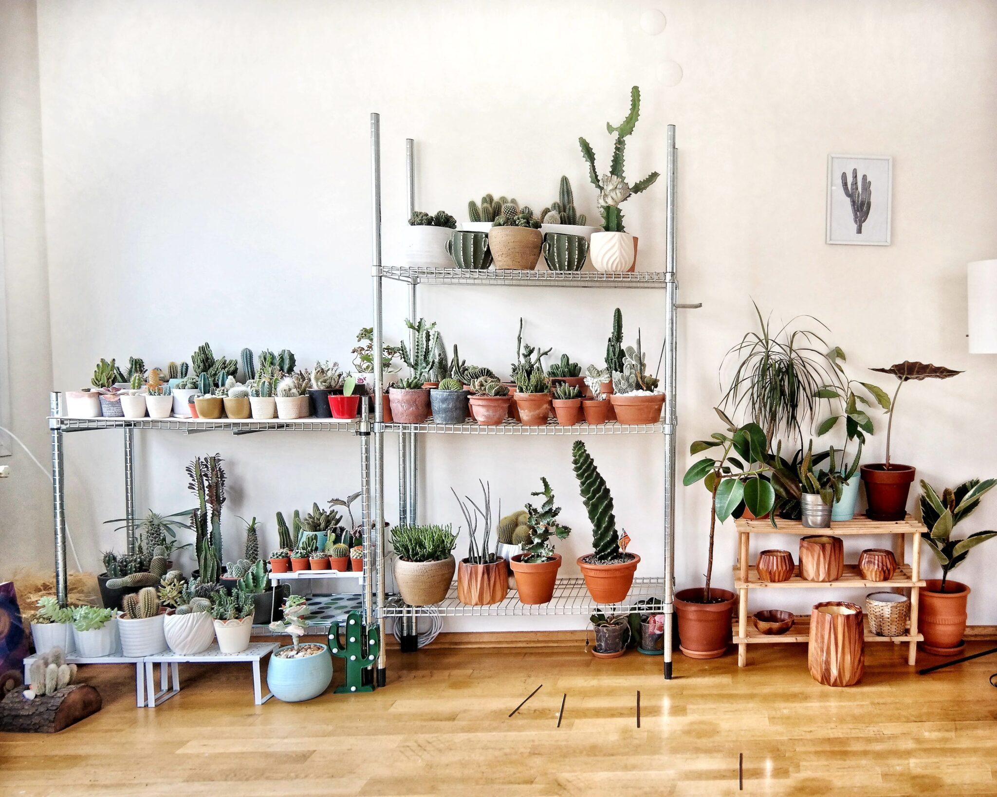 How to… look after your pot plants!