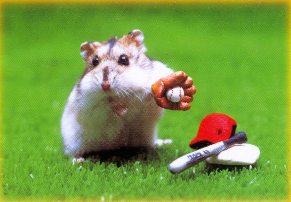Hamster Baseball