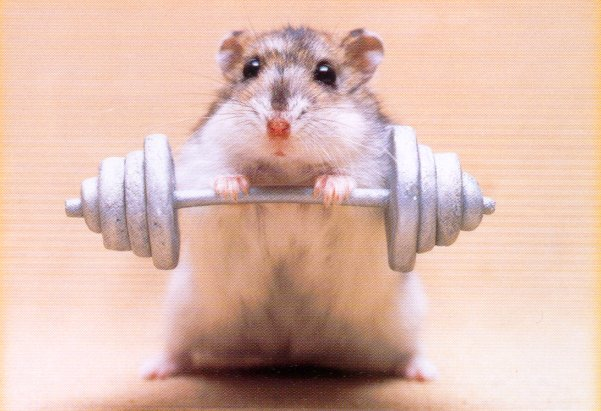 Hamster Weights
