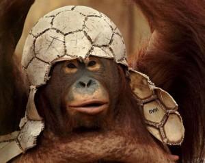 poze-animale-haioase-maimute-chimpanzeu-fotbal-300×238