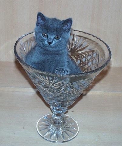 unblue_cat1