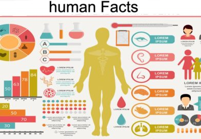 Humen Body Facts
