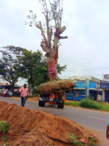 tree relocation 1 compressed1