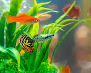Petland Texas Aquarium