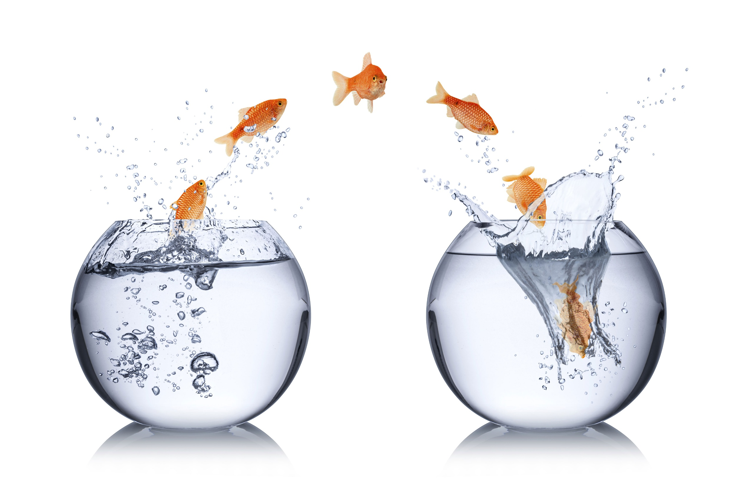 Transformaction involves leaping into a new fishbowl
