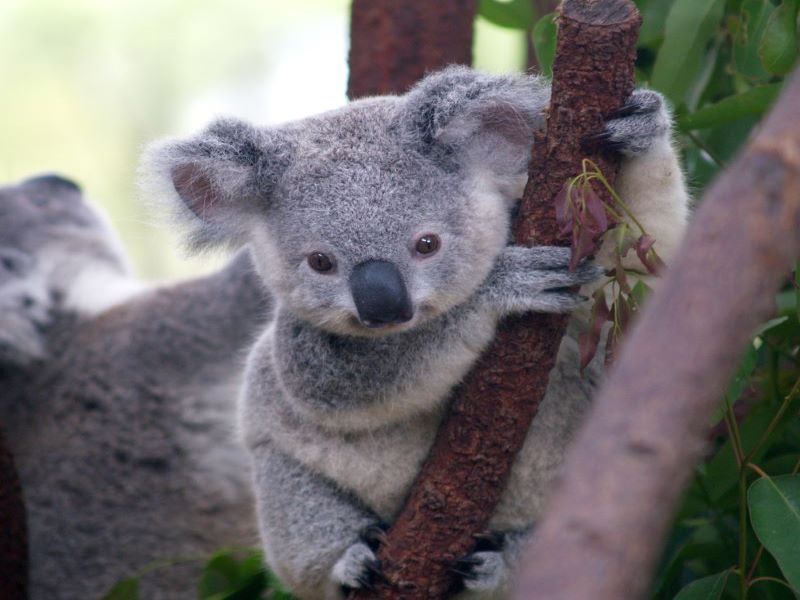 <span style='color:#00000;font-size:36px;'>Why Koalas Burning Alive Won't Change a Thing About the ClimateCrisis</span><h3> We need to focus on the cause, not the effect of the climate crisis </h3>