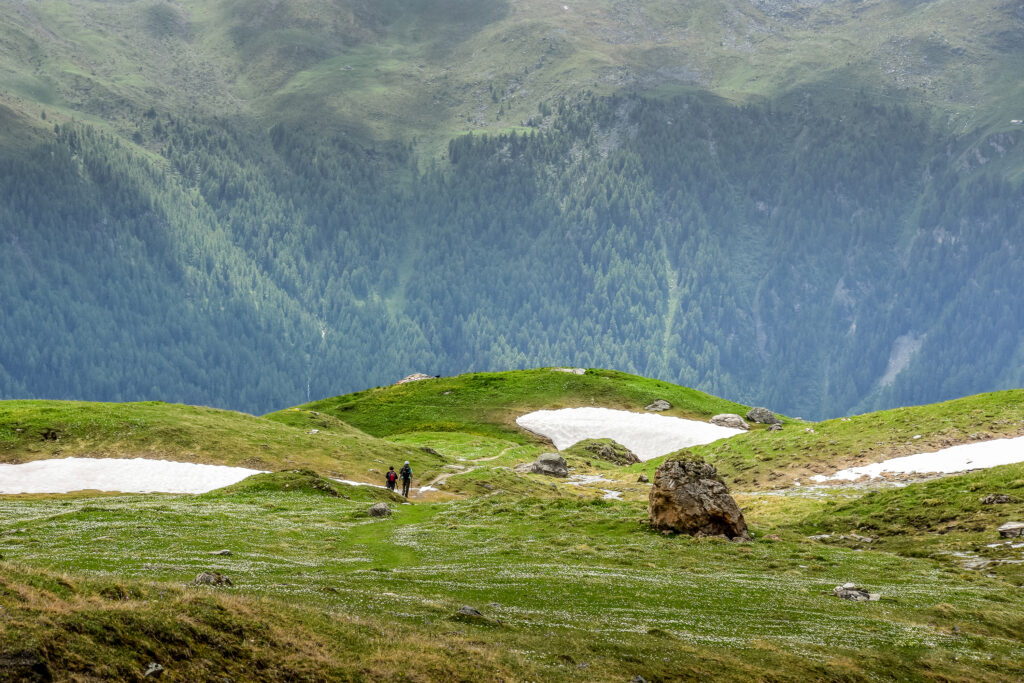 Couple walking in swiss mountain pastures in spring - wild vibrant spring colors in the alps