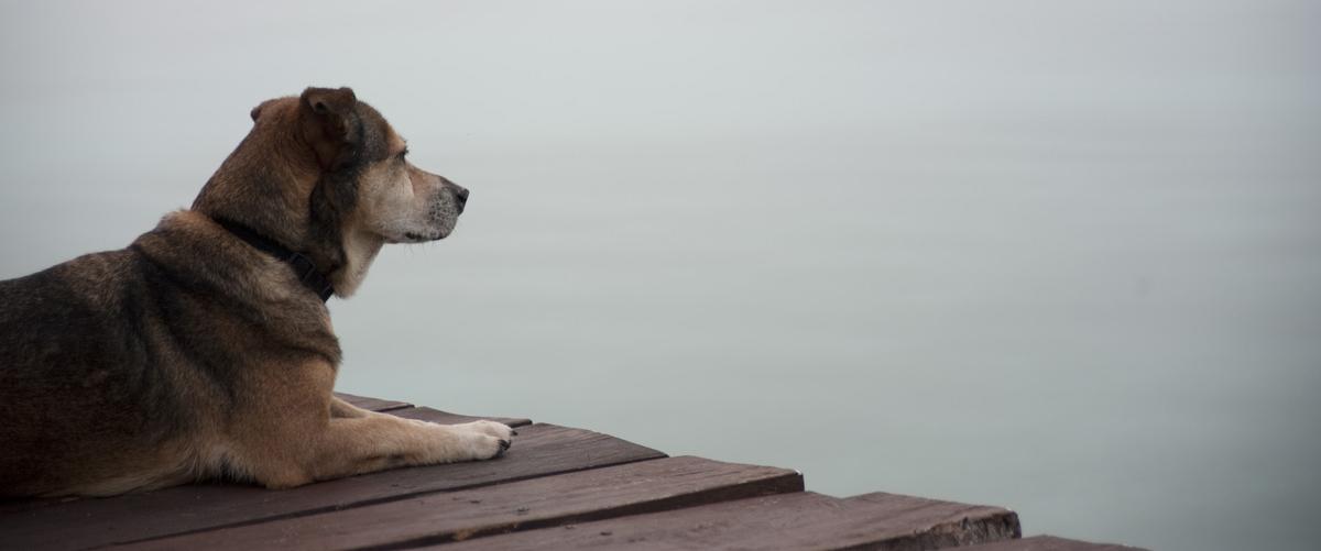 We love our dogs - Pehaltun Villas on Laguna Bacalar, Mexico