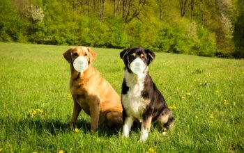 Here's Why You Might Want To Get A Dog