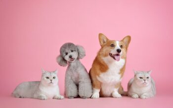How To Choose A Great Pet For Your Family