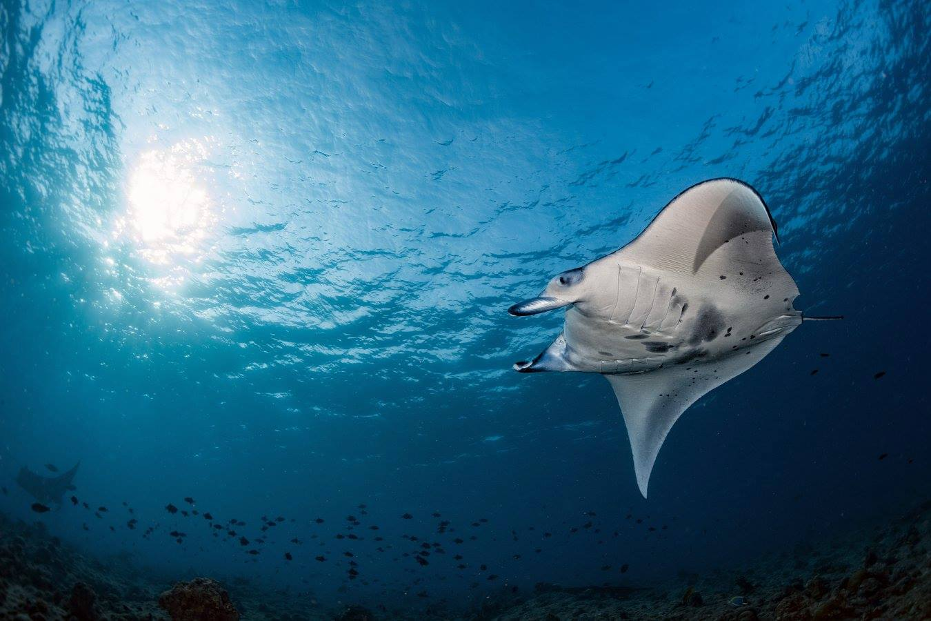 Scuba Dive in Brisbane