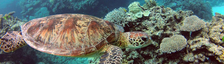 Brisbane scuba diving