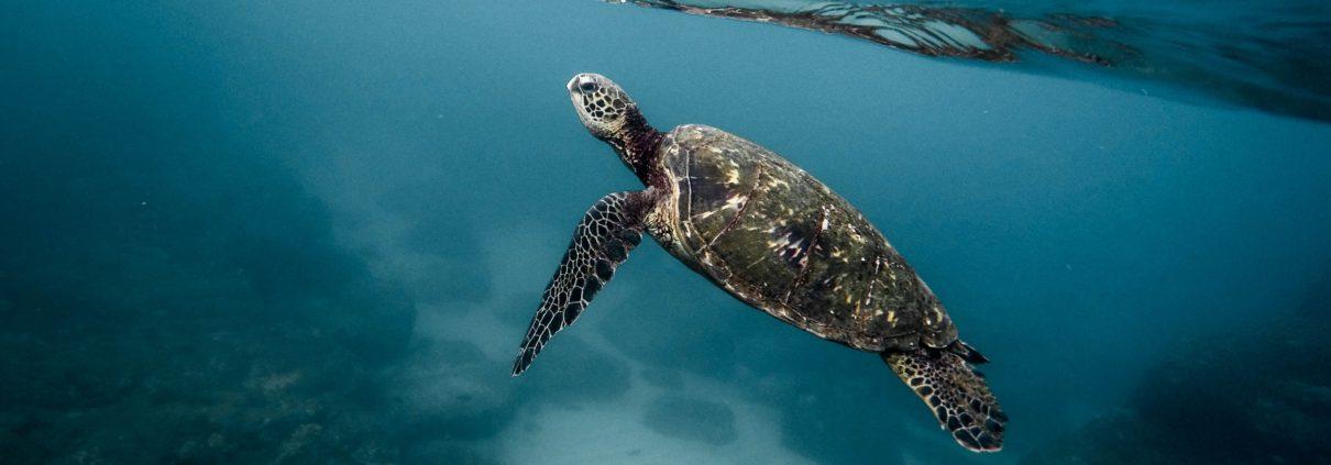 Dive Cook Island